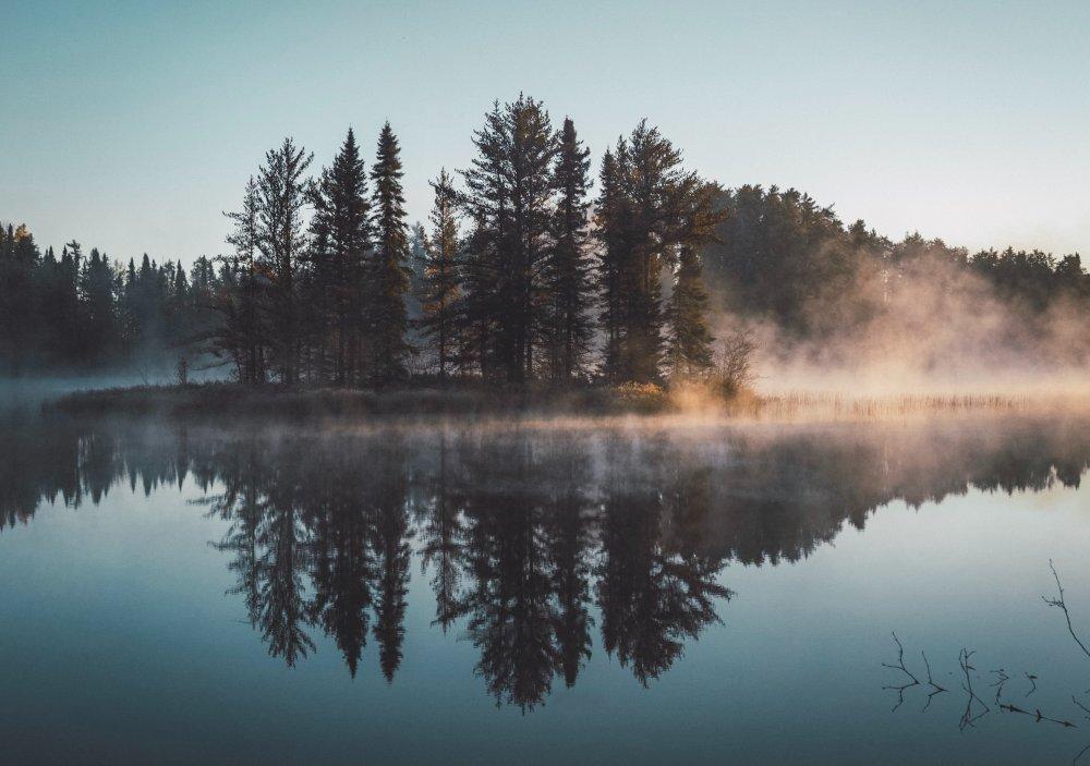 Skogen – en mångsidig resurs