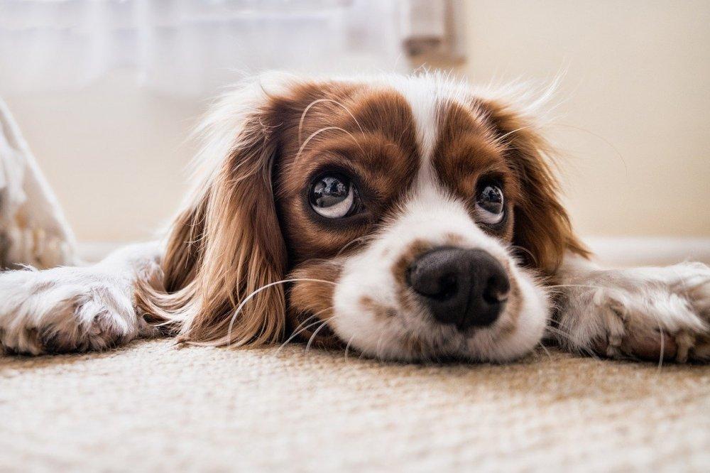Aktivitet för hunden